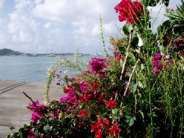 Blumeninsel Martinique.jpg